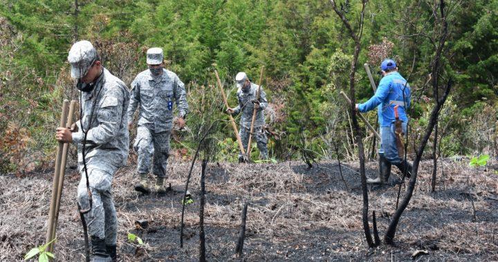 Reforestación en Rionegro